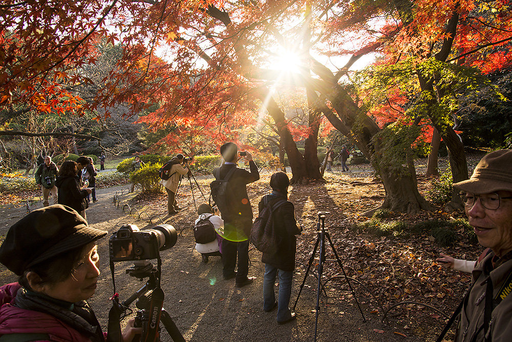 Japanese Autumn 2013