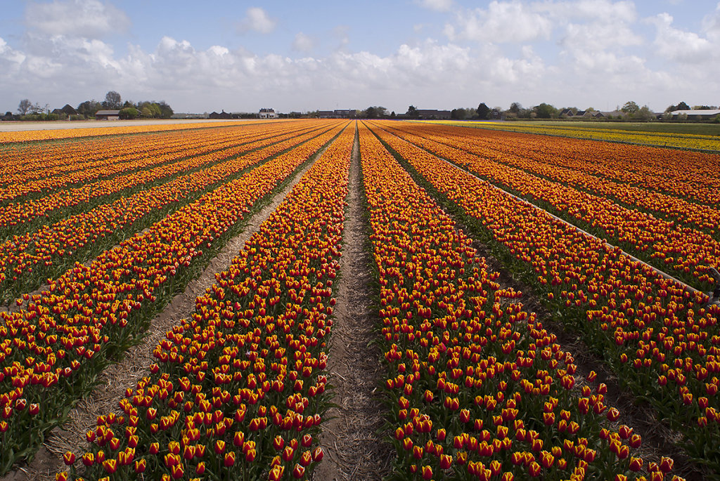 Dutch Fields 2014